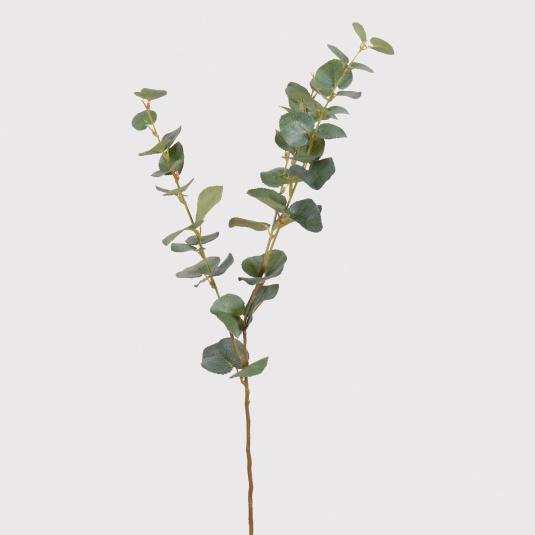 Natural Eucalyptus