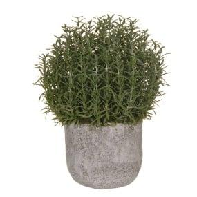 Rosemary Bush Pot