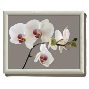 Orchid Harmony Lap Tray