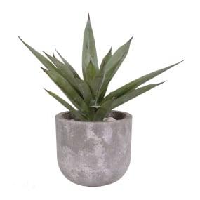 Aloe Vera Cement Pot